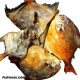 Dry Pomfret Fish - 400 Gram Express Delivery
